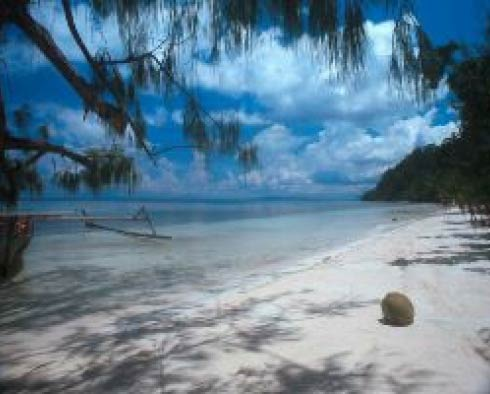 Walea dive resort indonesia - Walea dive resort ...