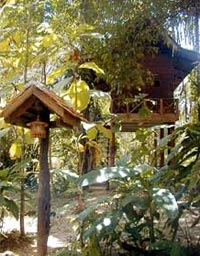 Jungle lodge thailand for Clearbrook lodge